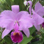 Podar orquidea