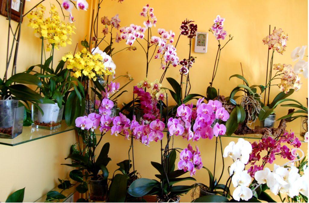podar orquideas cuidados