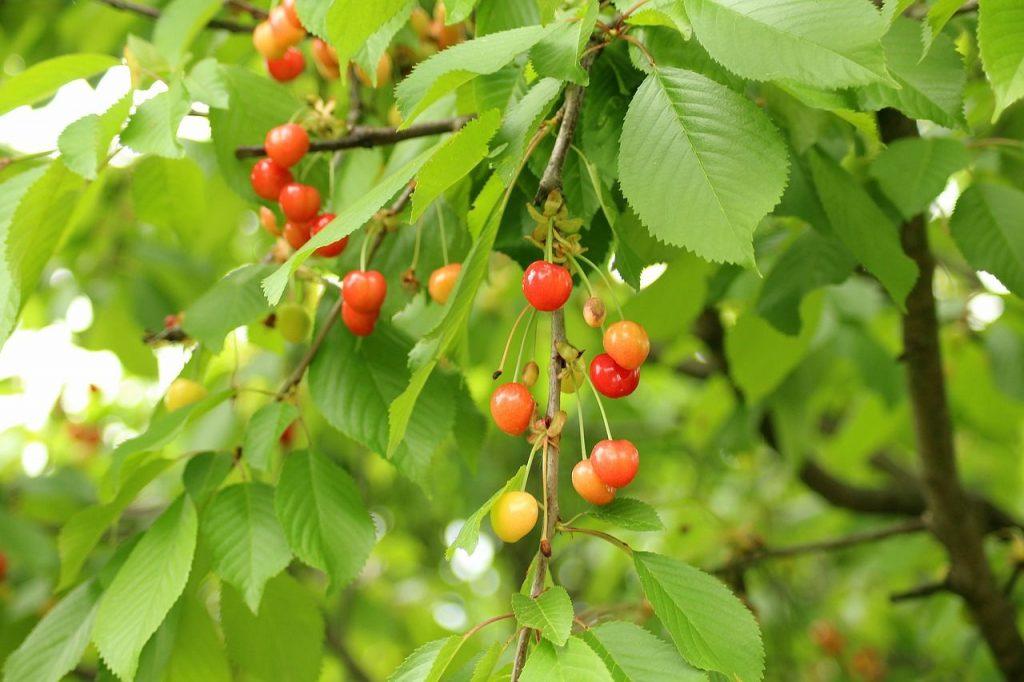 podar arboles en mayo