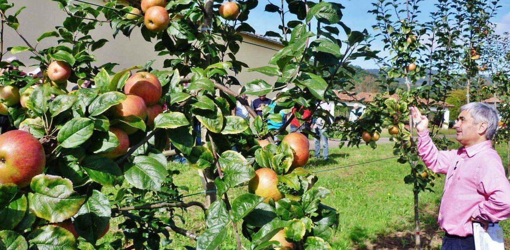 podar manzano bonsai