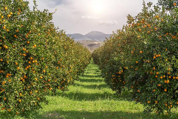 podar naranjos en marzo