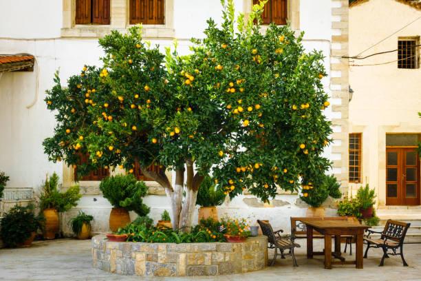 podar naranjos enanos