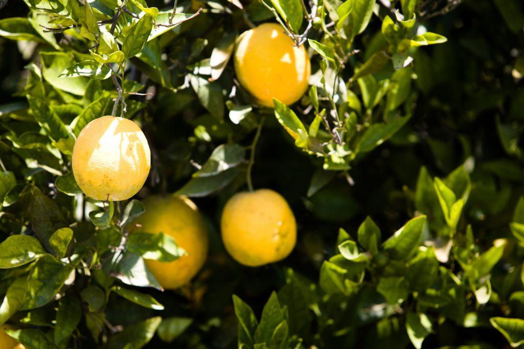 podar naranjos en verano