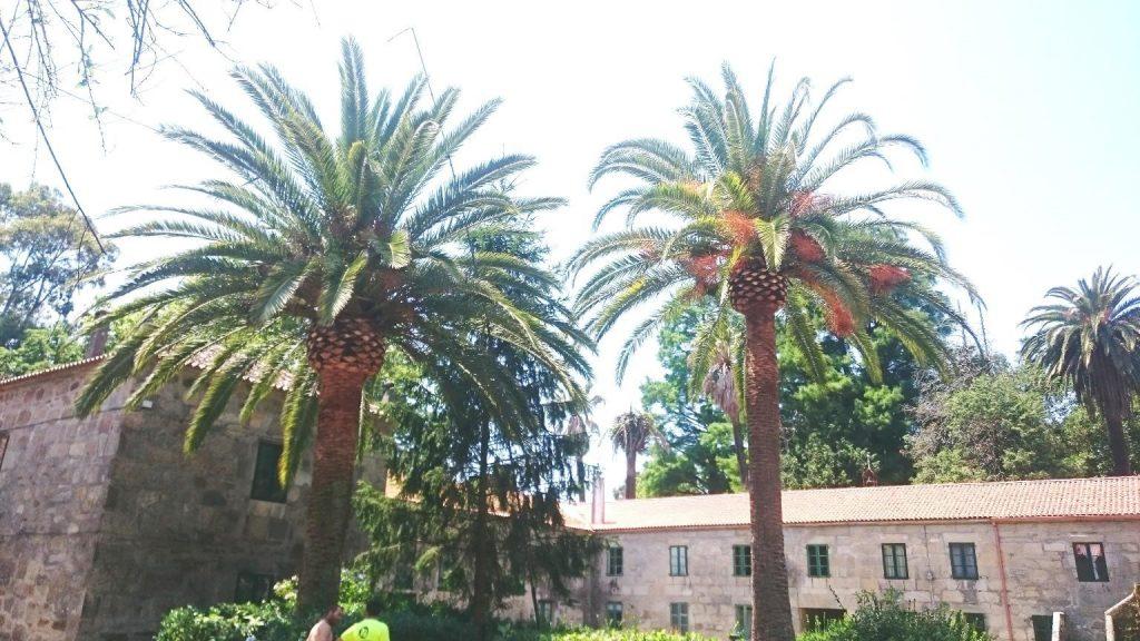podar palmeras murcia