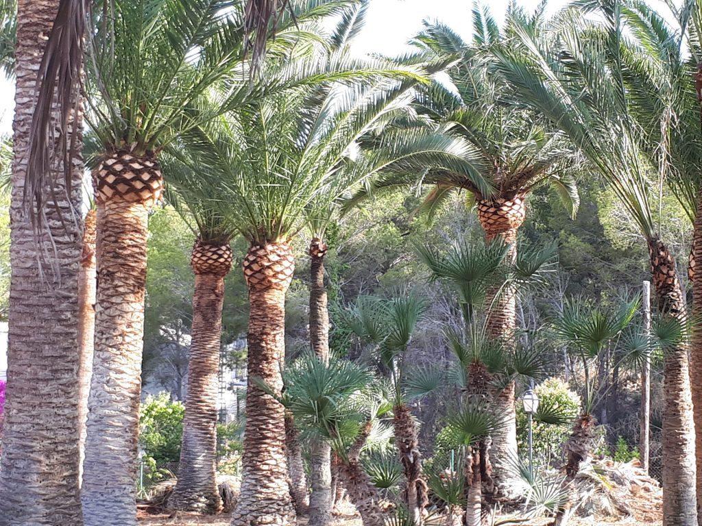 podar palmeras precio