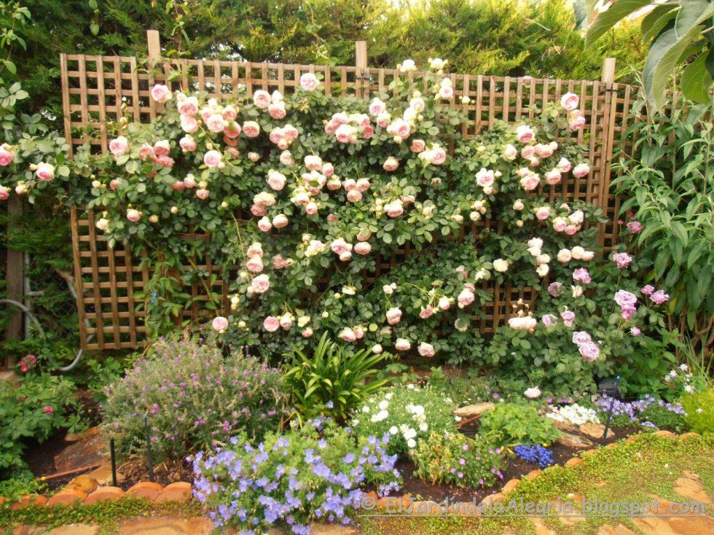 podar rosales altos