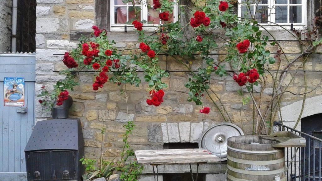 podar rosales enfermos