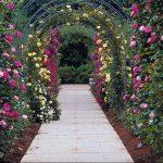 Podar rosales