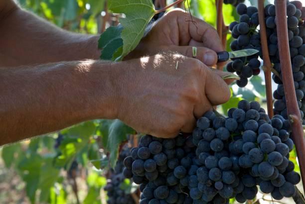 podar viñas abandonadas