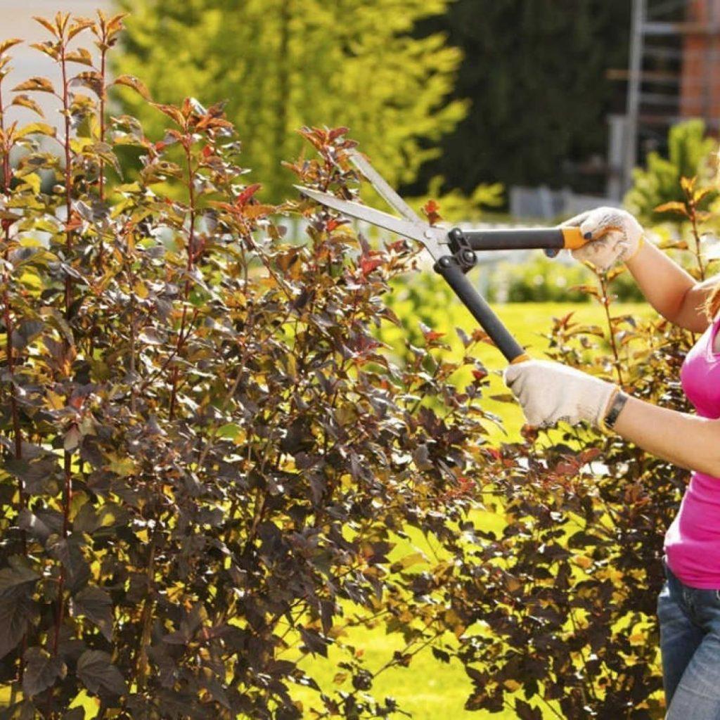 podar jardines lezica