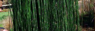 Podar Bambú