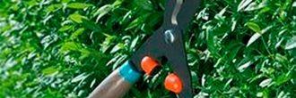 Podar Arbustos