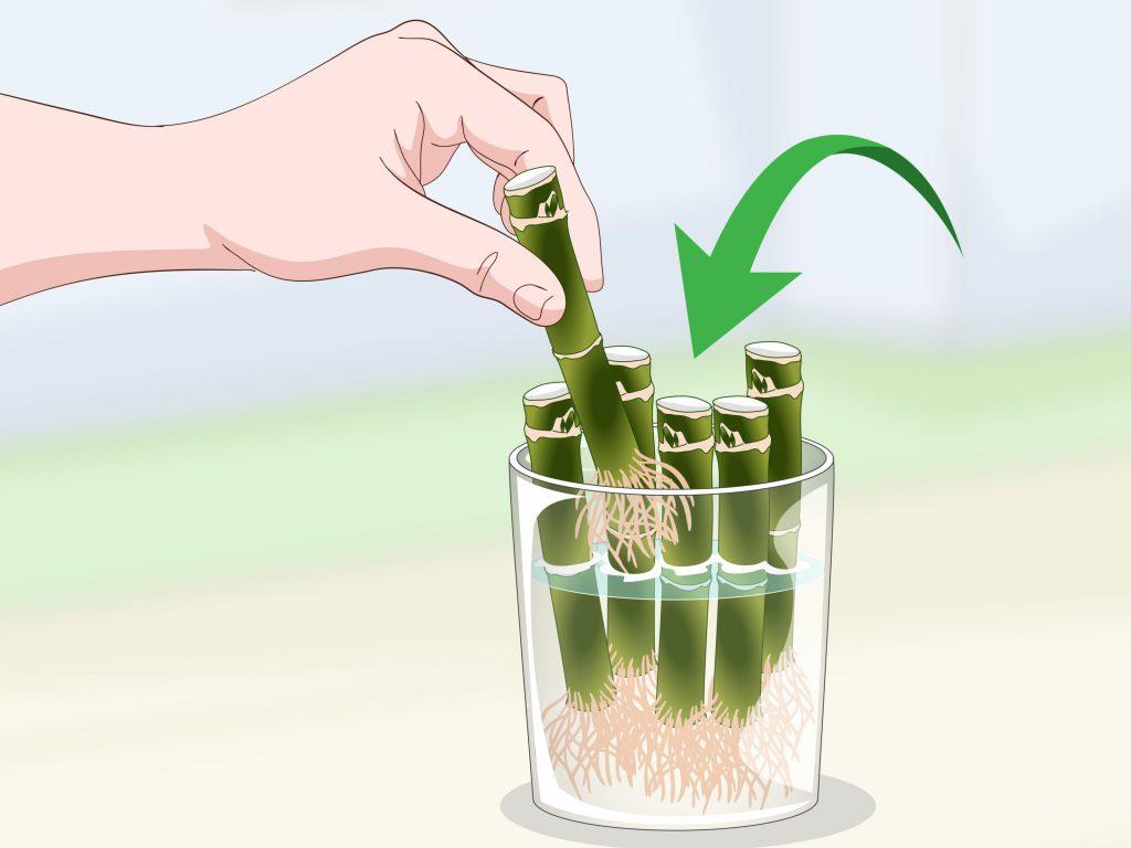 podar-bambú