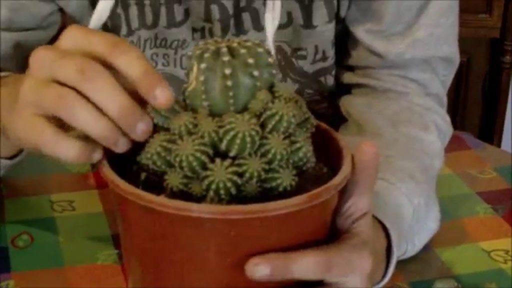 epoca para podar cactus