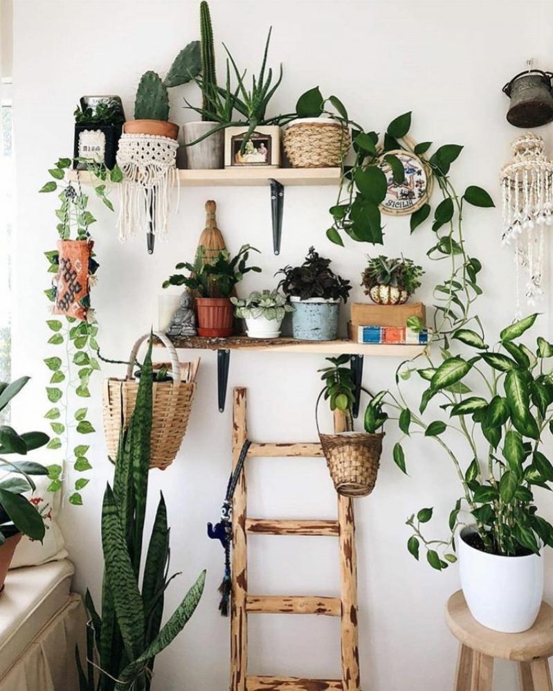 como podar mis plantas de interior