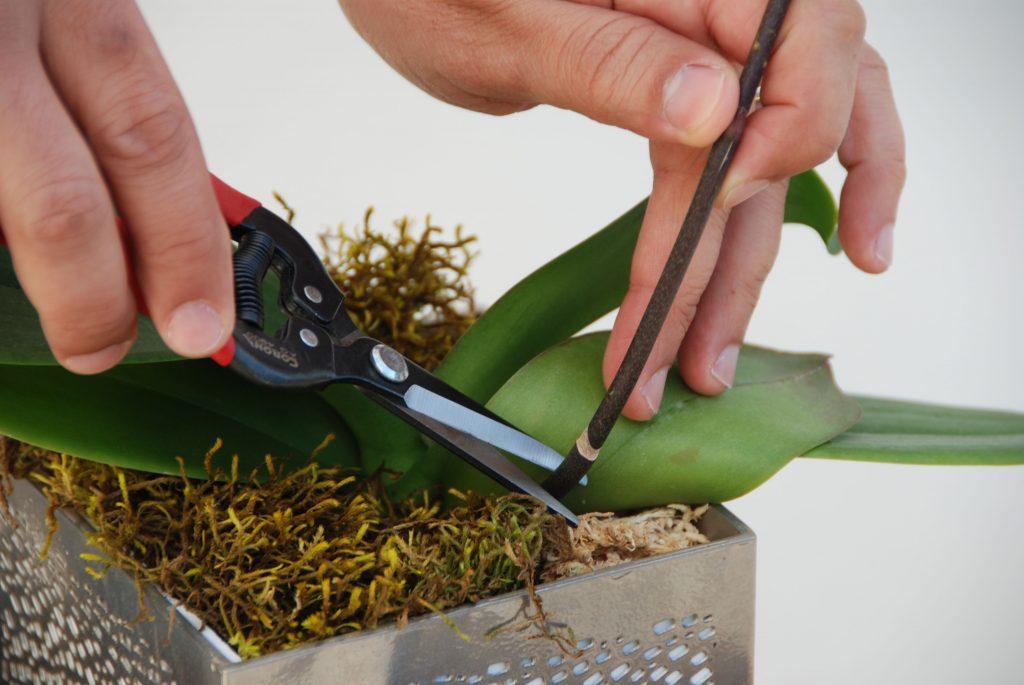 epoca de poda plantas de interior